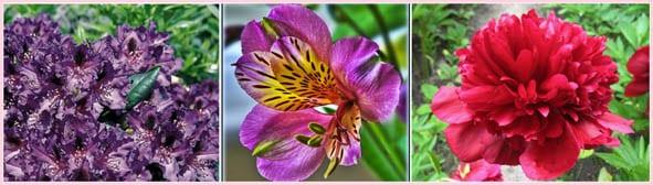 fiori deddicati alla Principessa Grace